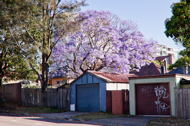 Jacaranda tree and million dollar carports.