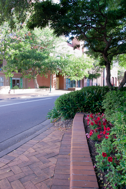 At this point I've left the residential and I am walking into the Hurstville CBD. This is part of old Hurstville town and it has some nice flowers and leafy trees.