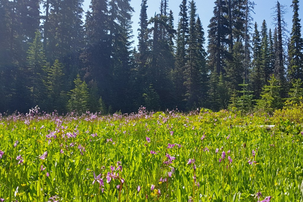 Elk Meadows wildflowers.